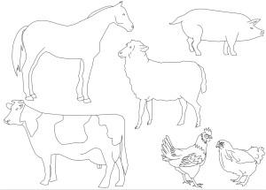 Coloriage animaux ferme