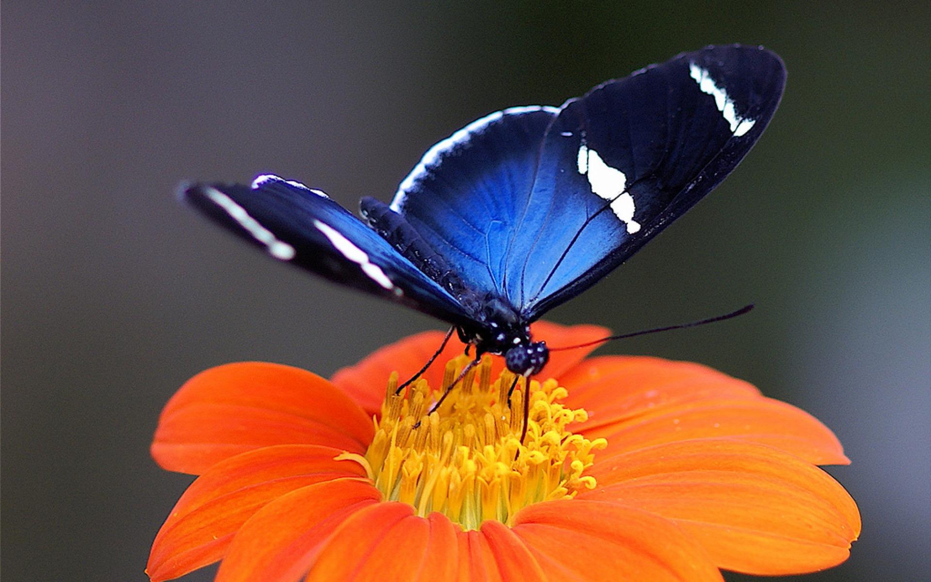 Coloriage fleur papillon imprimer - Papillon fleur ...