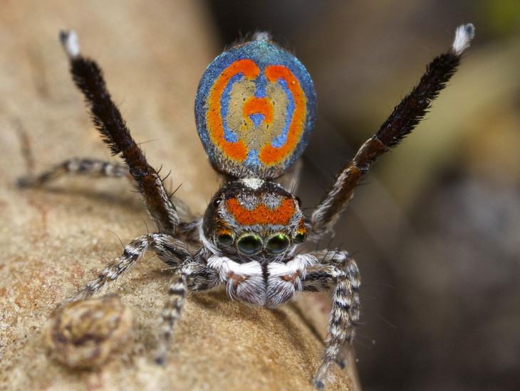 Araignée couleur