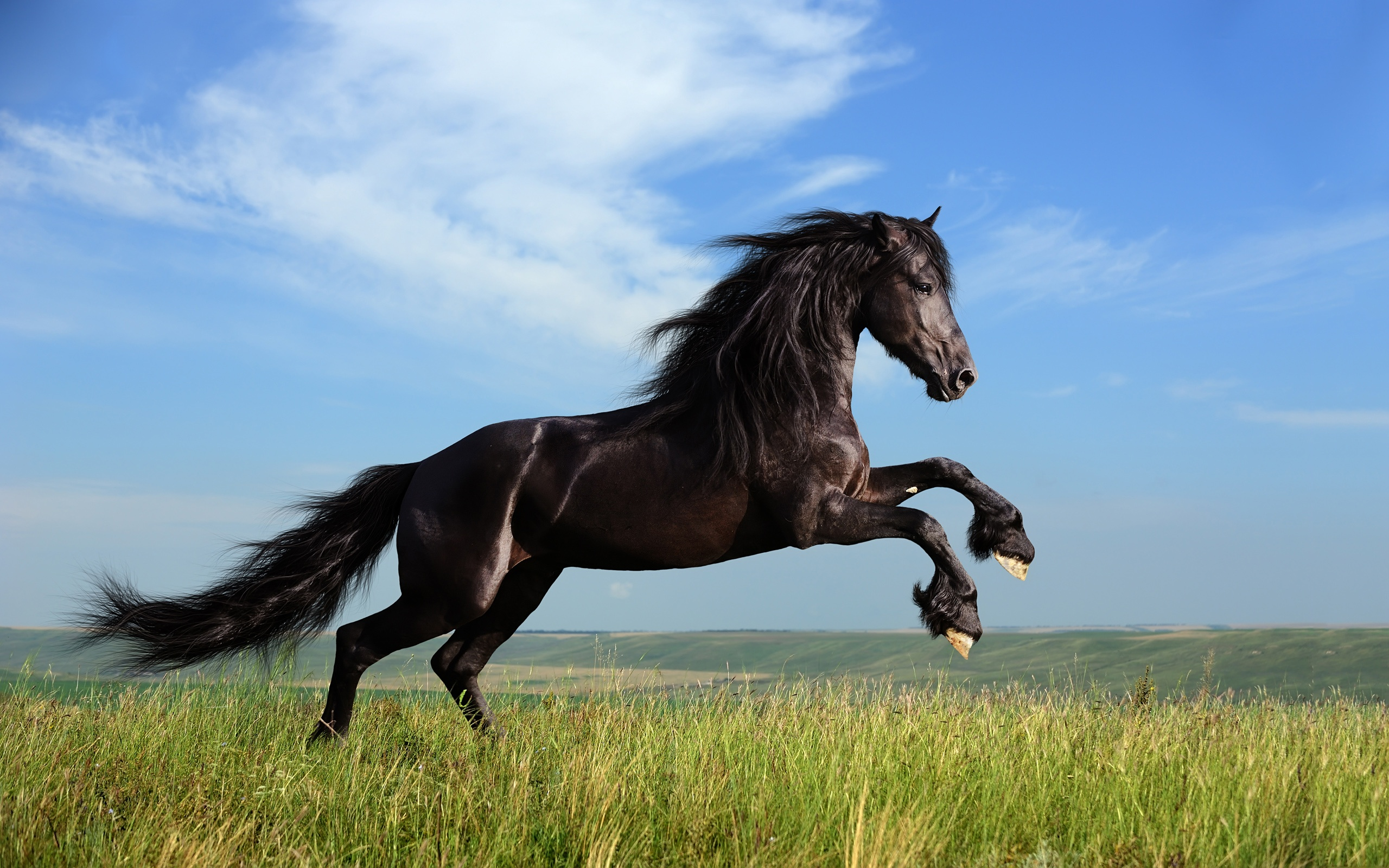 Coloriage cheval au galop imprimer - Chevaux gratuits ...