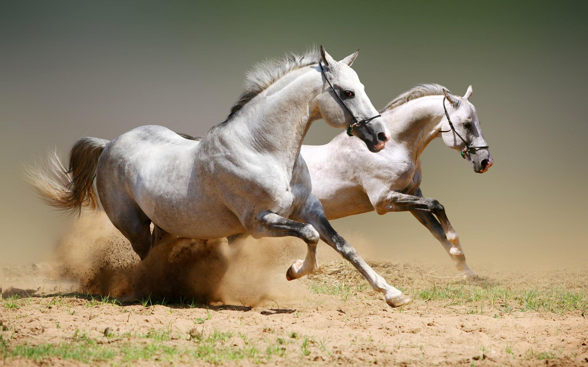 Fabuleux Coloriage cheval au galop gratuit à imprimer FS96