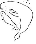 Coloriae Beluga