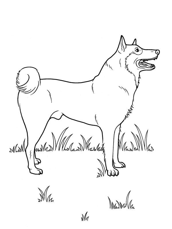Coloriage chien heureux