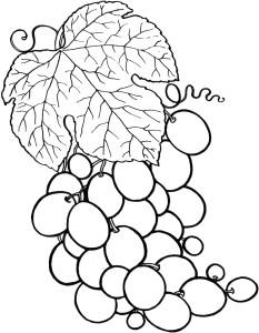 Coloriage grappe de raisins