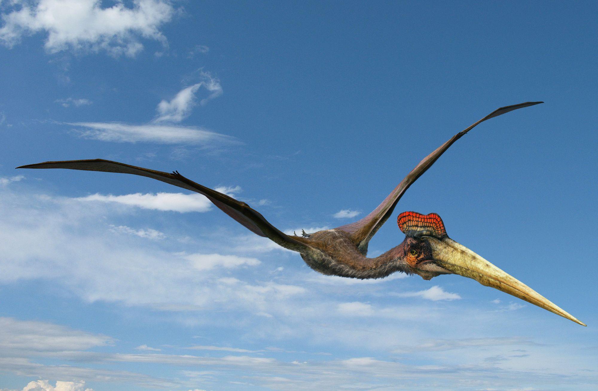 Coloriage dinosaure volant imprimer - Jeux de dinosaure volant ...