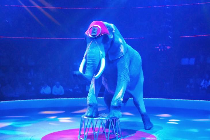 Elephant de cirque