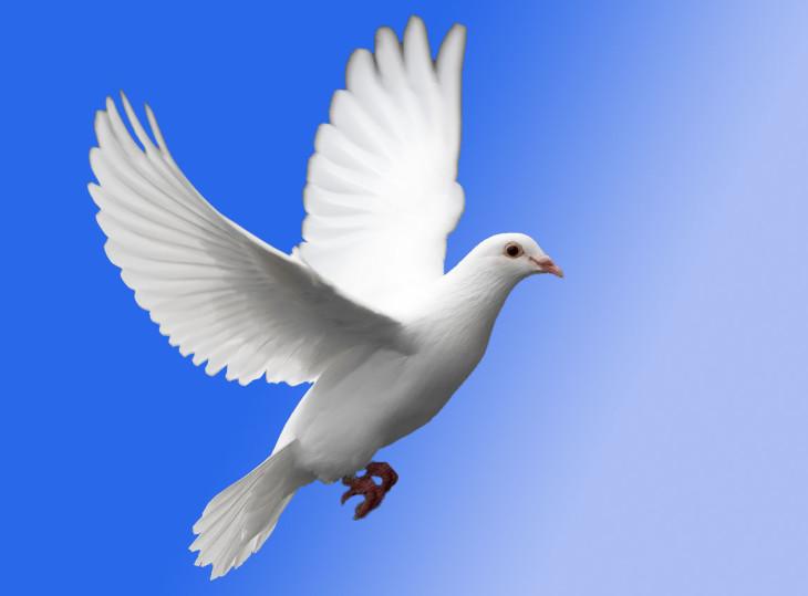 Coloriage colombe à imprimer