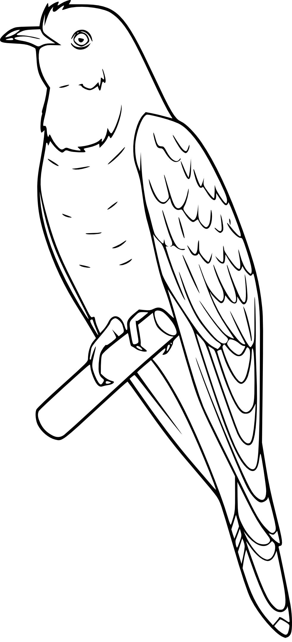 Coloriage Coucou Oiseau à Imprimer