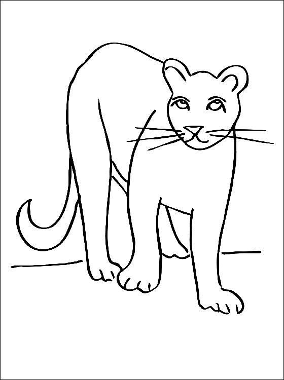 Coloriage cougar