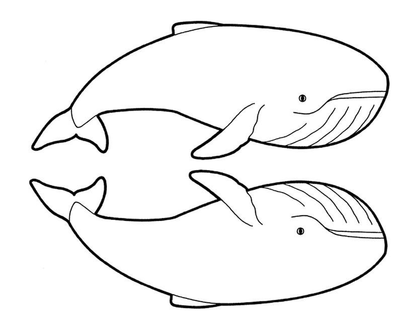 Coloriage deux baleines