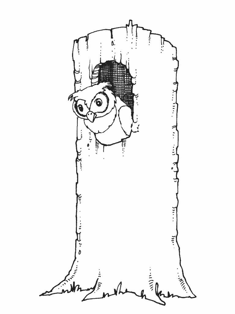 Coloriage hibou arbre