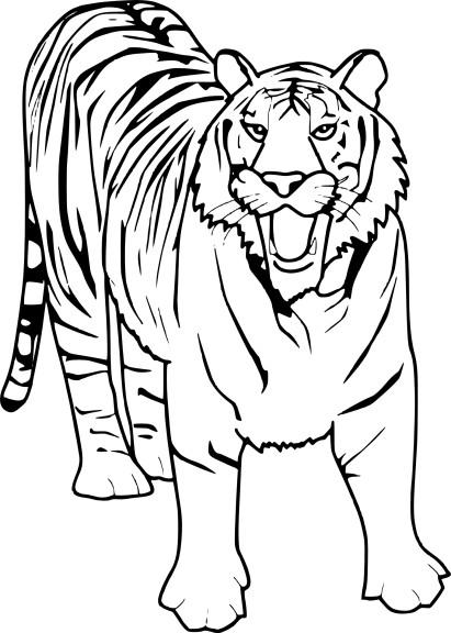 Coloriage tigre et dessin imprimer - Coloriage tigre ...