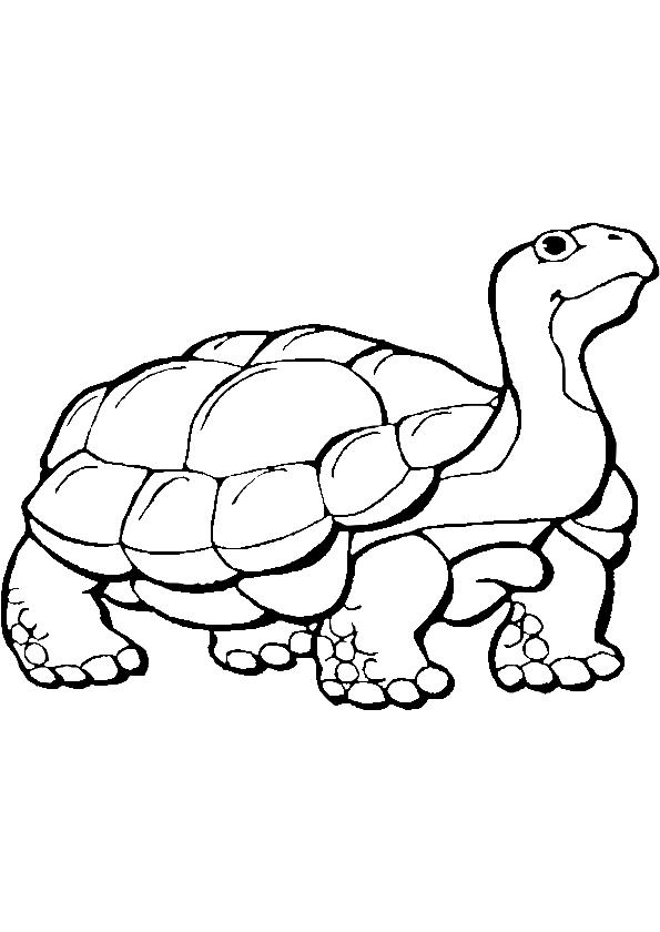 Coloriage tortue et dessin à imprimer