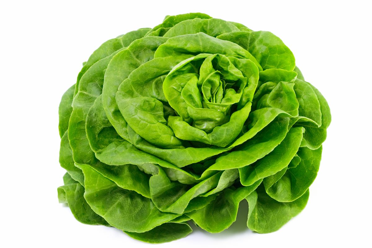 Coloriage salade à imprimer