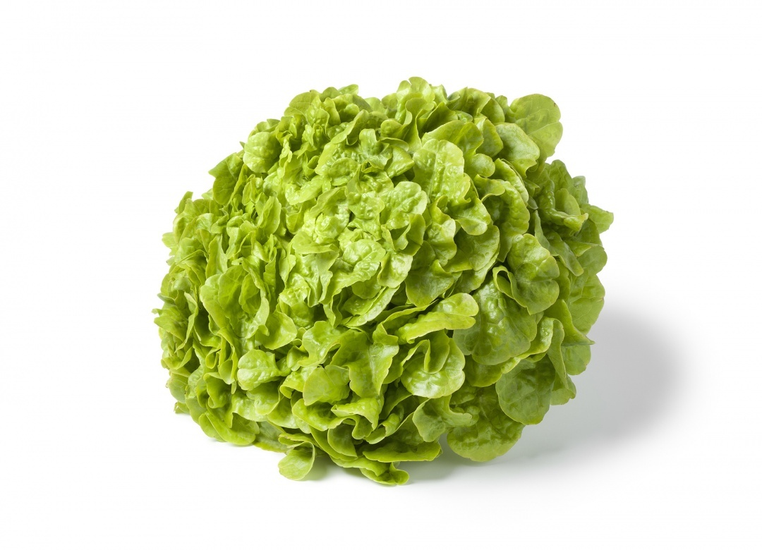 Coloriage Salade Verte 224 Imprimer