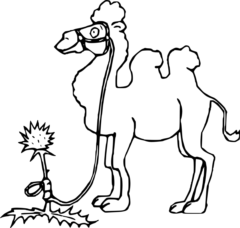Dessin chameau