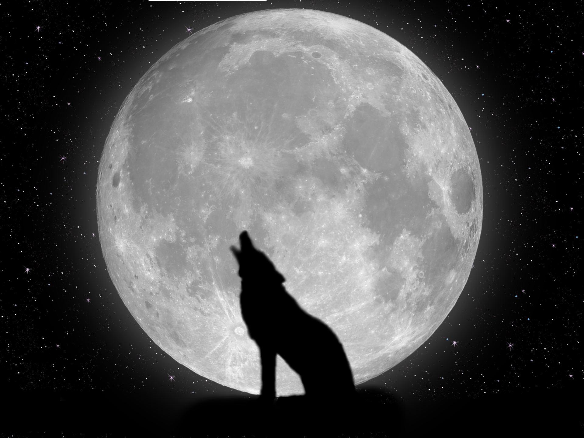 Coloriage loup pleine lune à imprimer