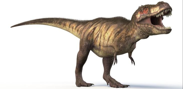Coloriage T Rex Dinosaure 224 Imprimer