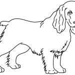 Coloriage chien cocker - Dessin de cocker ...