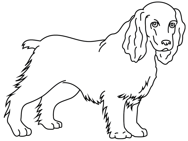 Coloriage chien cocker