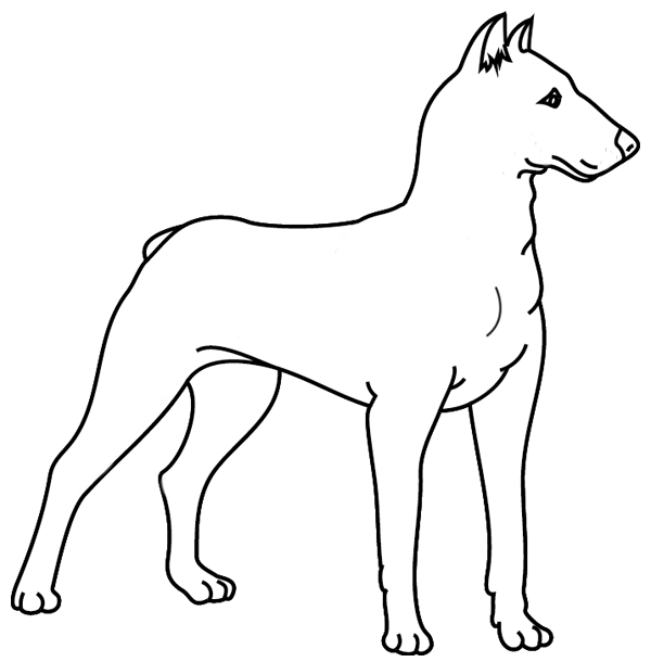 Coloriage chien doberman