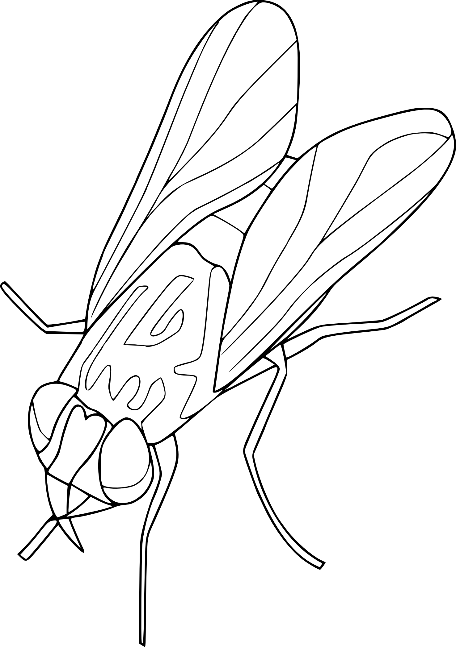 house fly coloring pages - photo #8