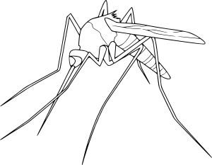 Coloriage moustique