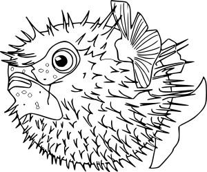 Coloriage poisson lune