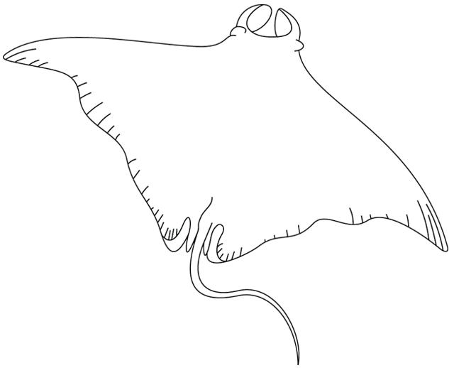 Coloriage raie manta