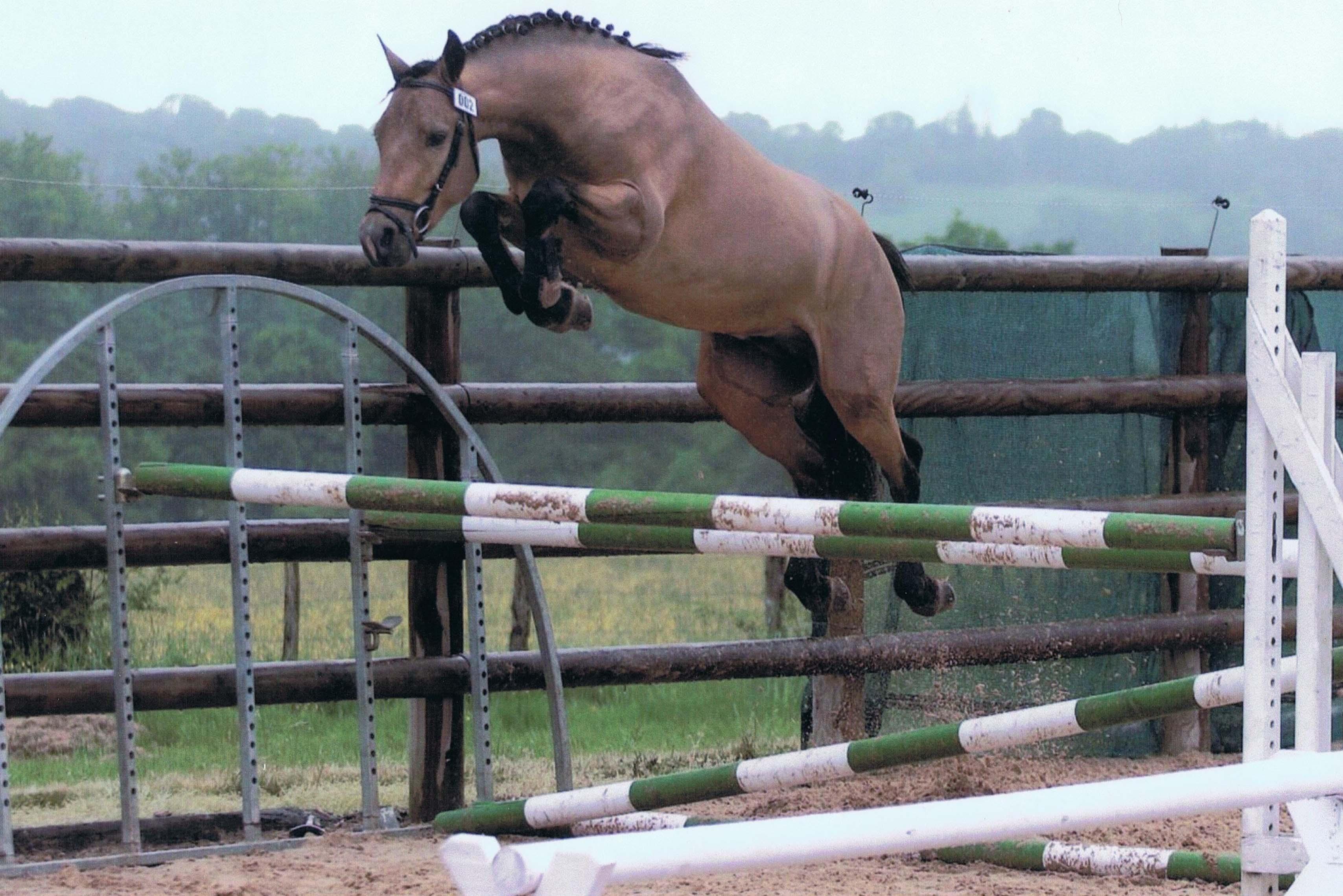 Coloriage cheval qui saute imprimer - Jeux de poney qui saute ...