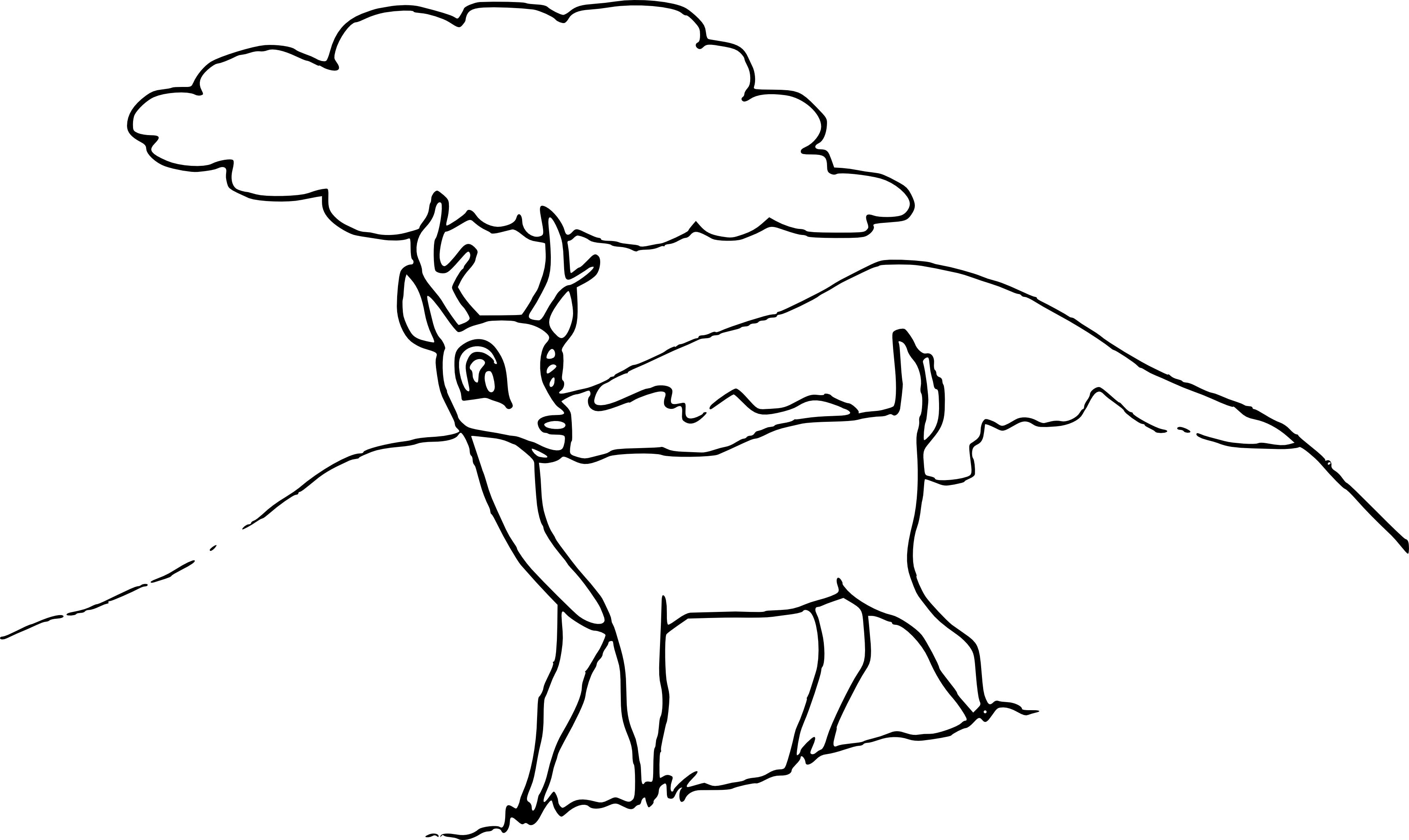 Chevreuil dessin