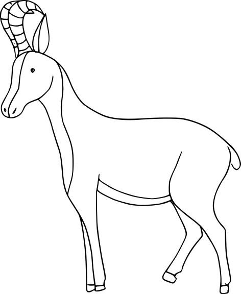 Coloriage bebe chamois