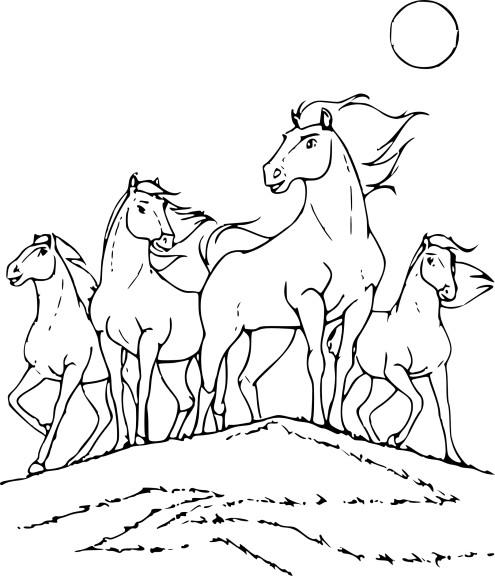 Coloriage cheval sauvage