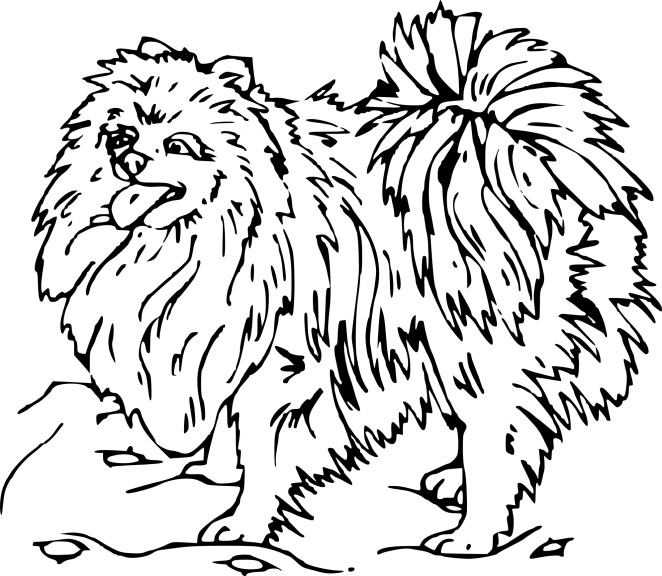 Coloriage Chow Chow
