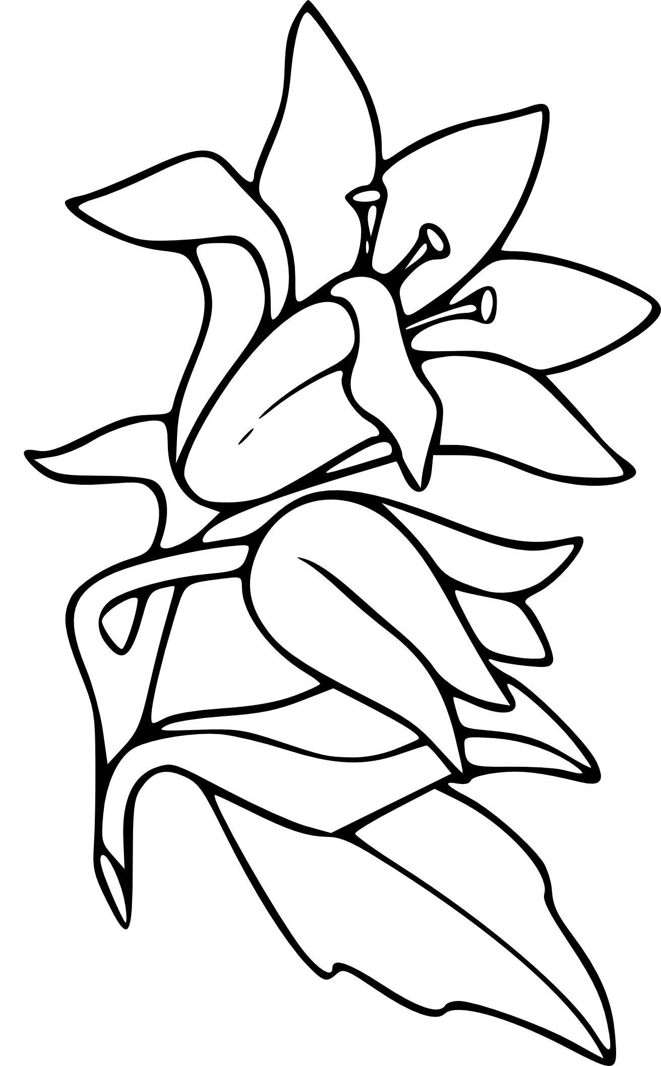 Coloriage fleur de Lys à imprimer