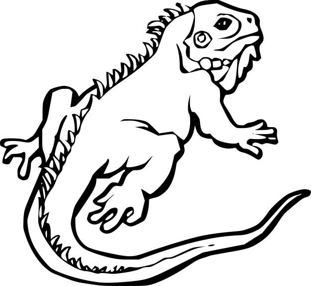 Coloriage Iguane