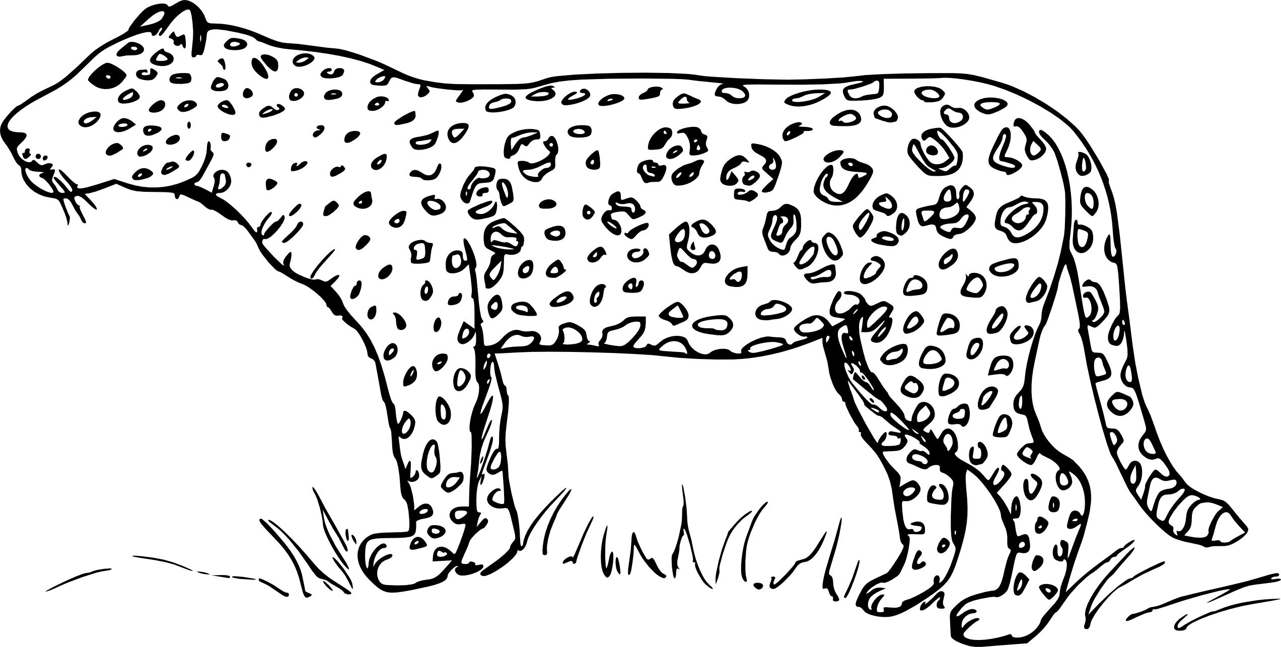 Coloriage Bebe Leopard.Beautiful Coloriage Leopard A Imprimer Inspirant Coloriage Leopard A