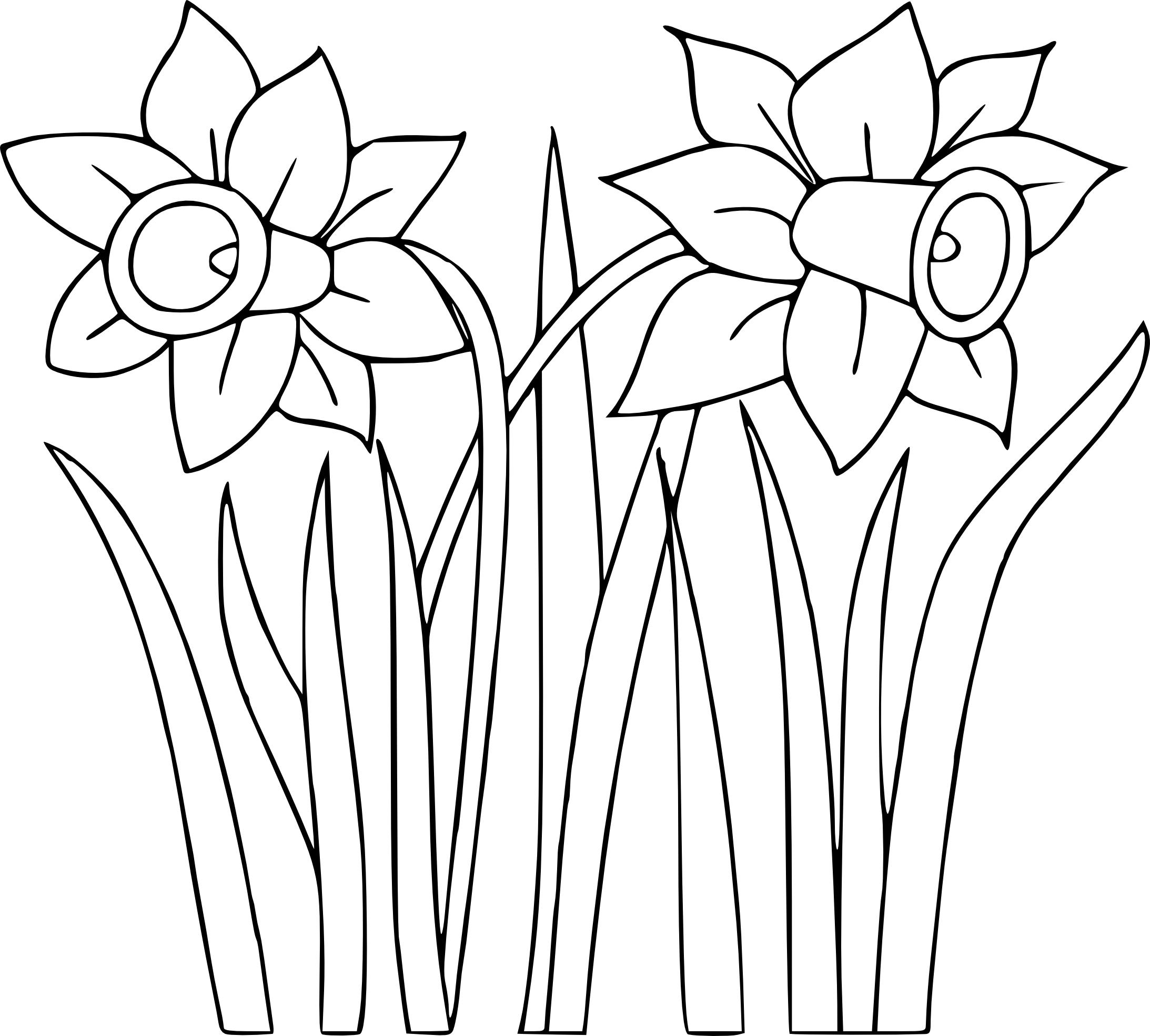 Coloriage jonquille imprimer - Coloriage de fleur ...