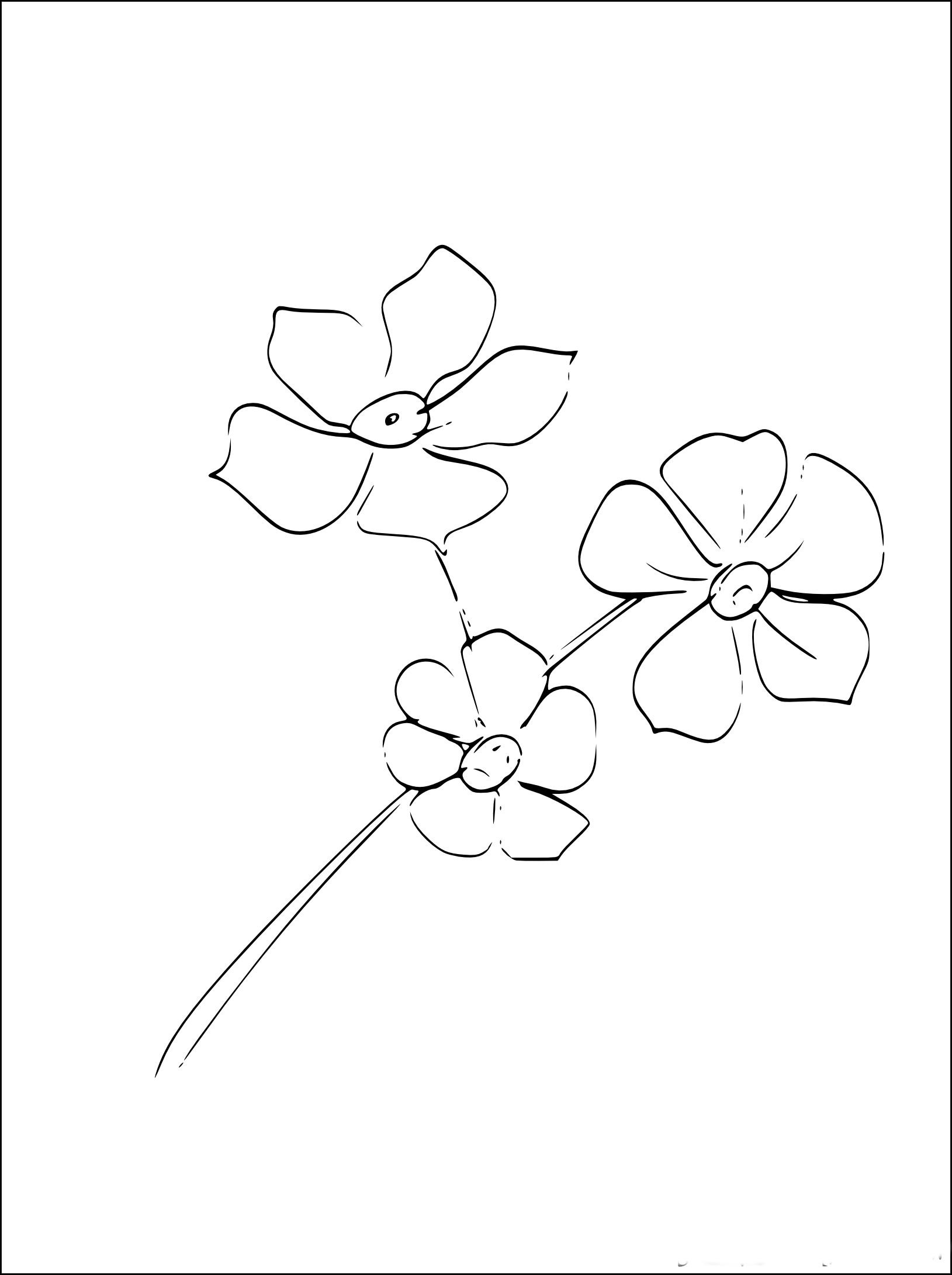 Coloriage Fleur Myosotis.Coloriage Myosotis A Imprimer