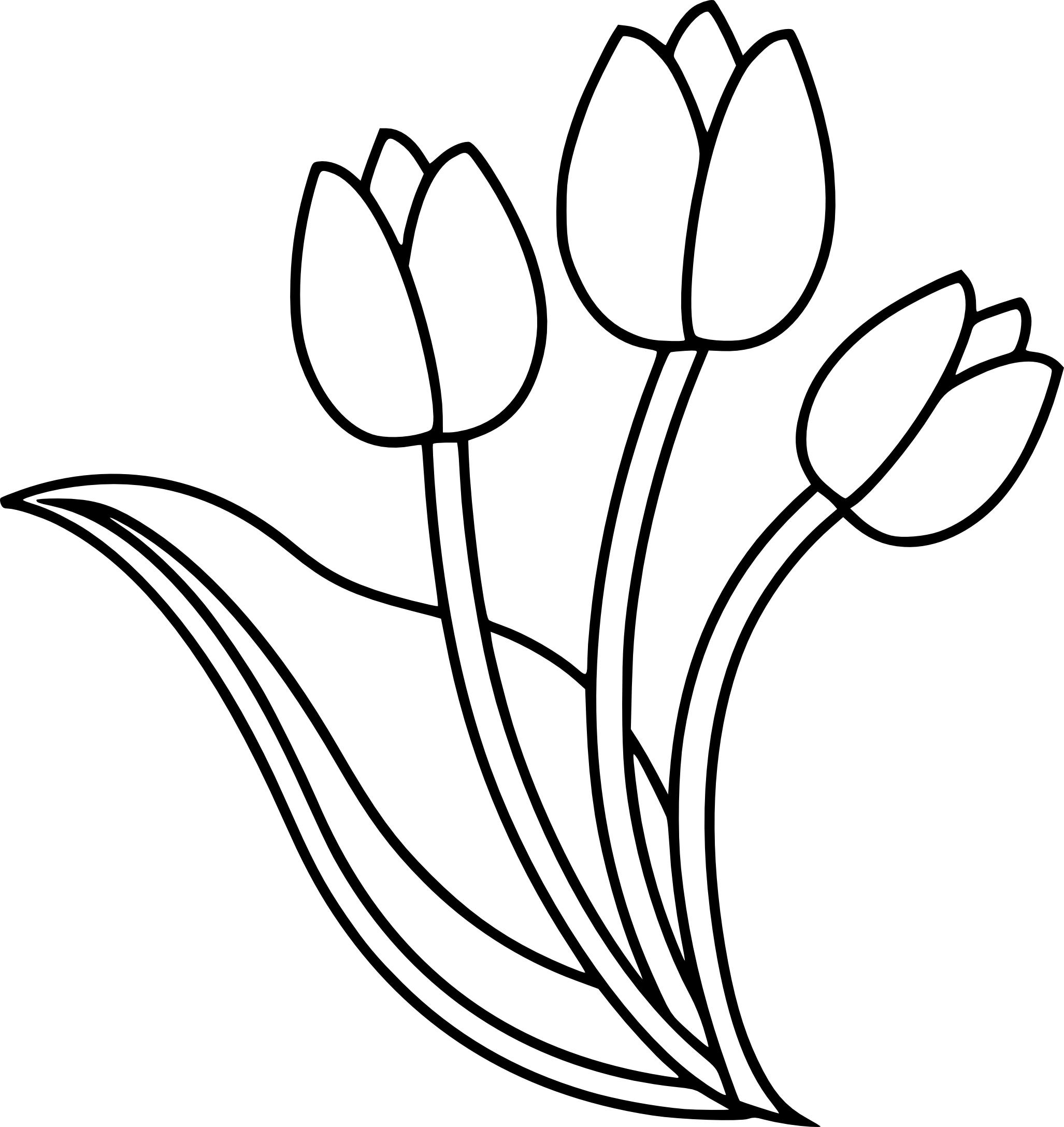Coloriage tulipe imprimer - Dessin de fleur facile ...