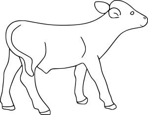 Coloriage cureuil et dessin imprimer - Coloriage petit veau ...