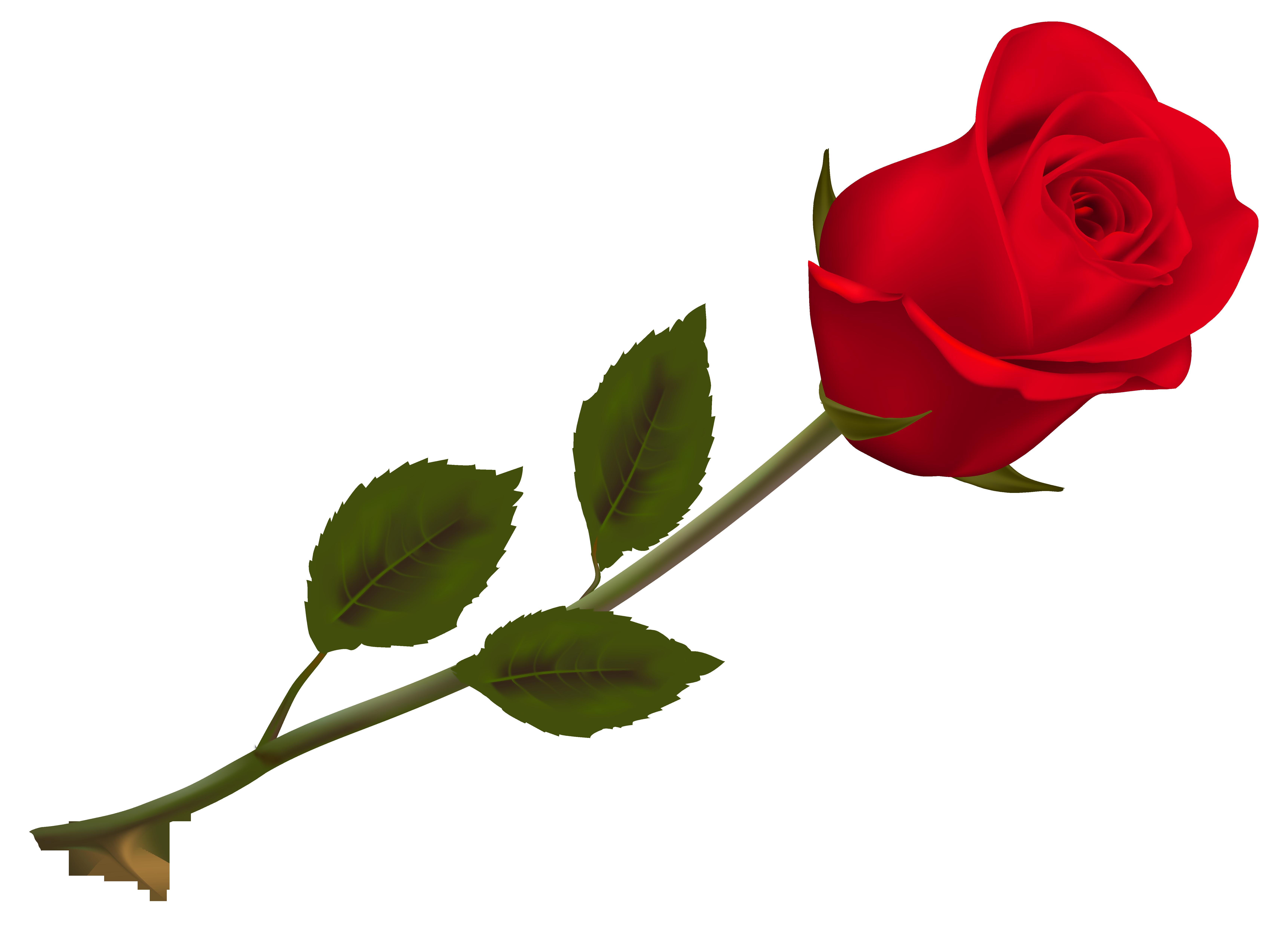 Coloriage Rose Et Dessin 224 Imprimer