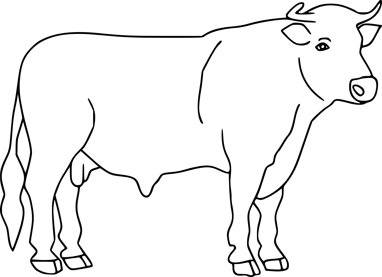 Dessin taureau