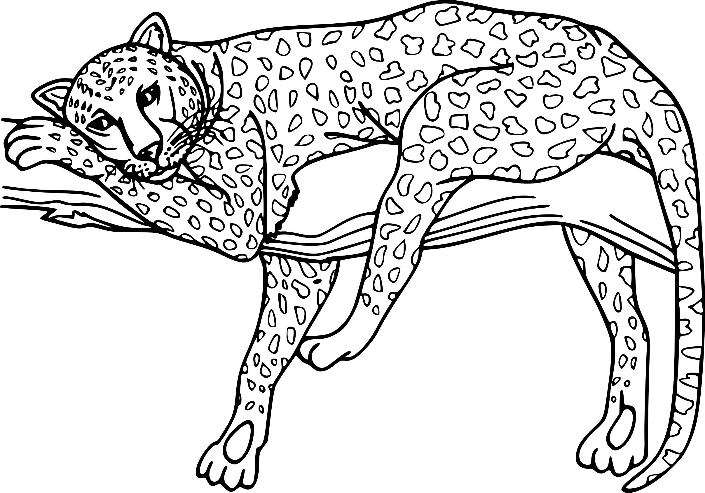 Guepard dessin