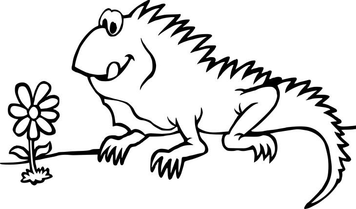 Iguane dessin