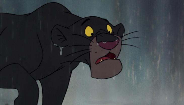 Panthere Bagheera