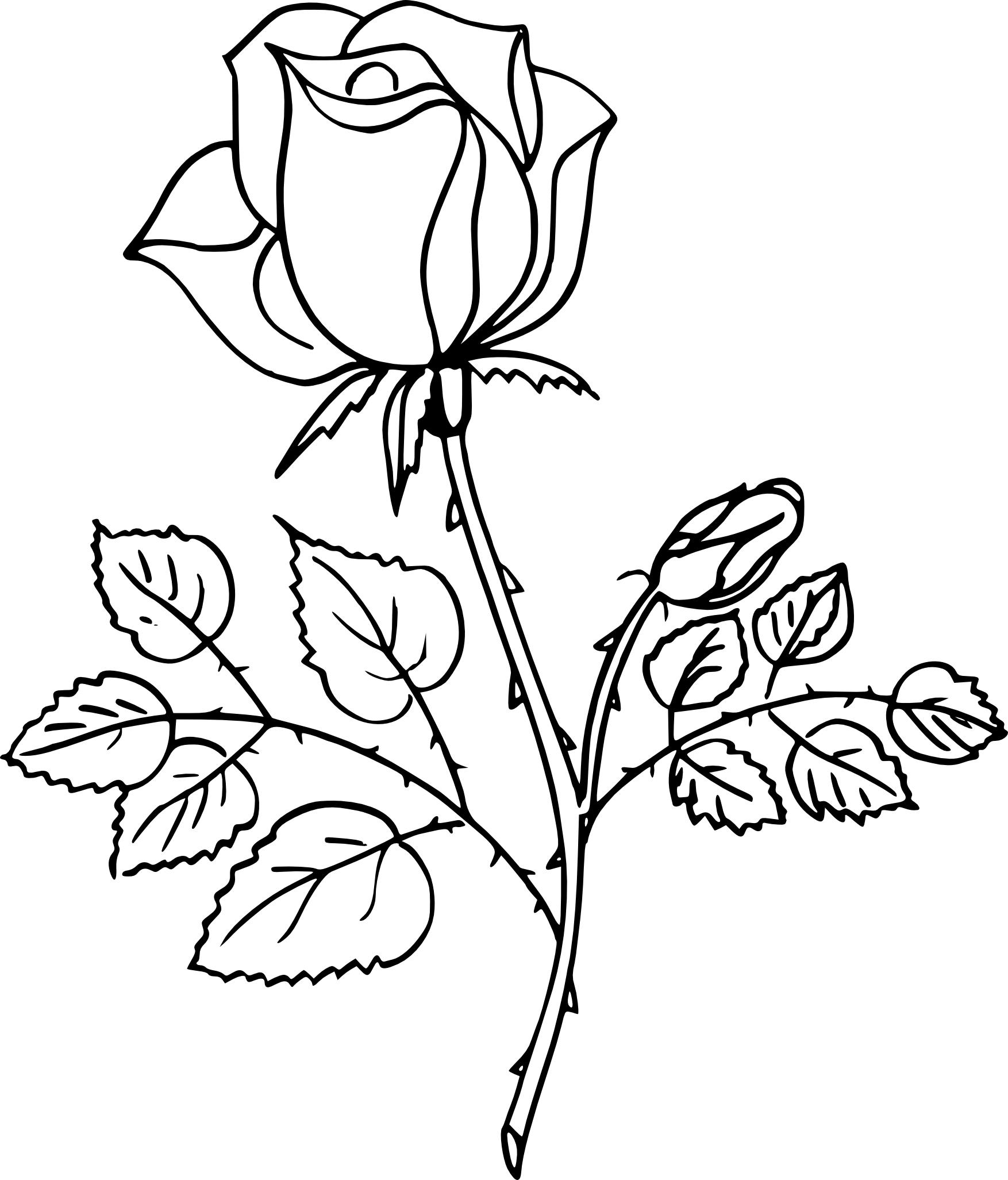 Coloriage Rose et dessin à imprimer