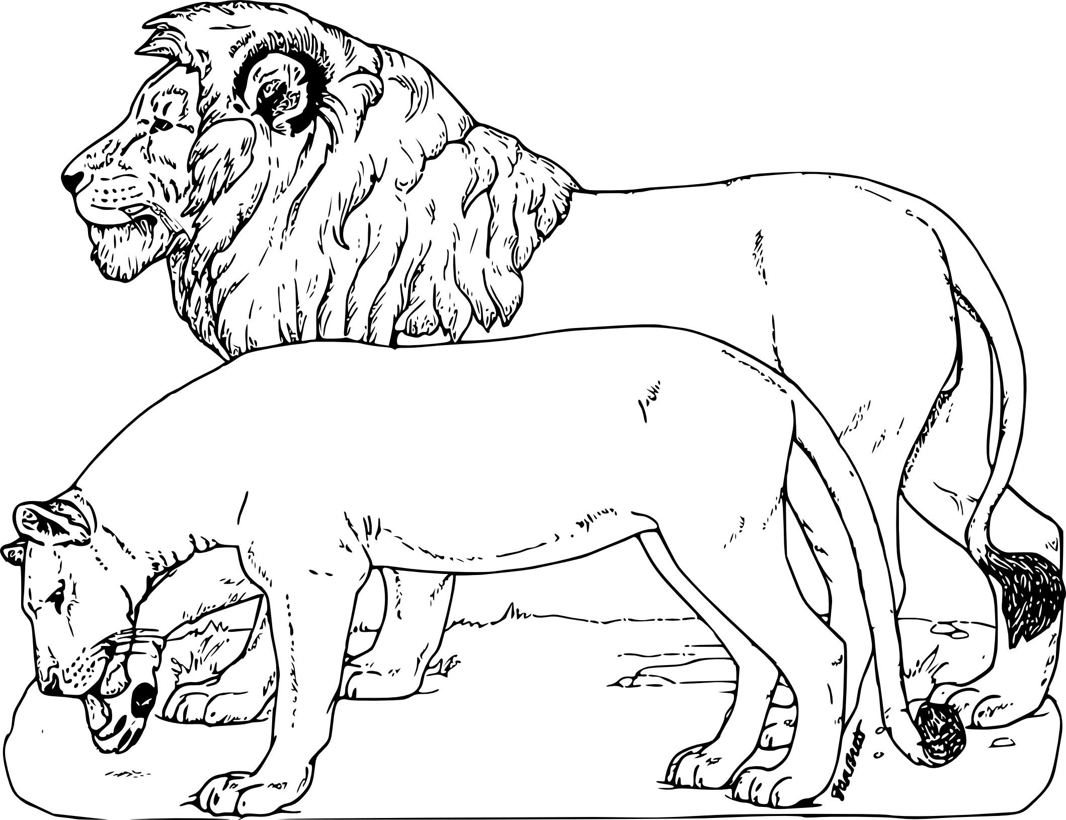 Coloriage Animaux sauvages lion à imprimer