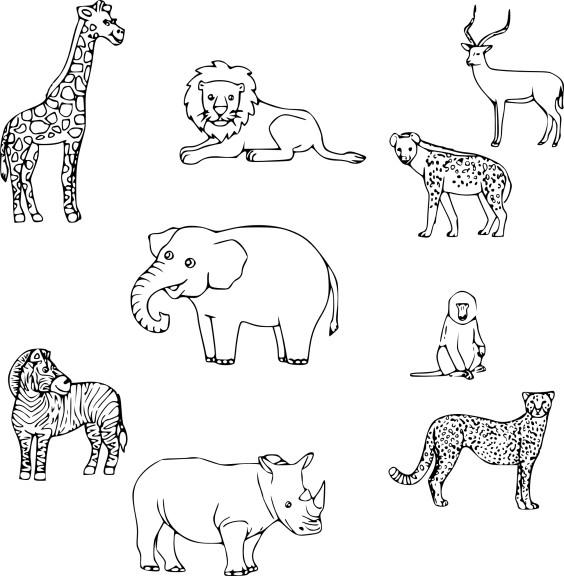 Coloriage animaux savane imprimer - Dessin noir et blanc animaux ...