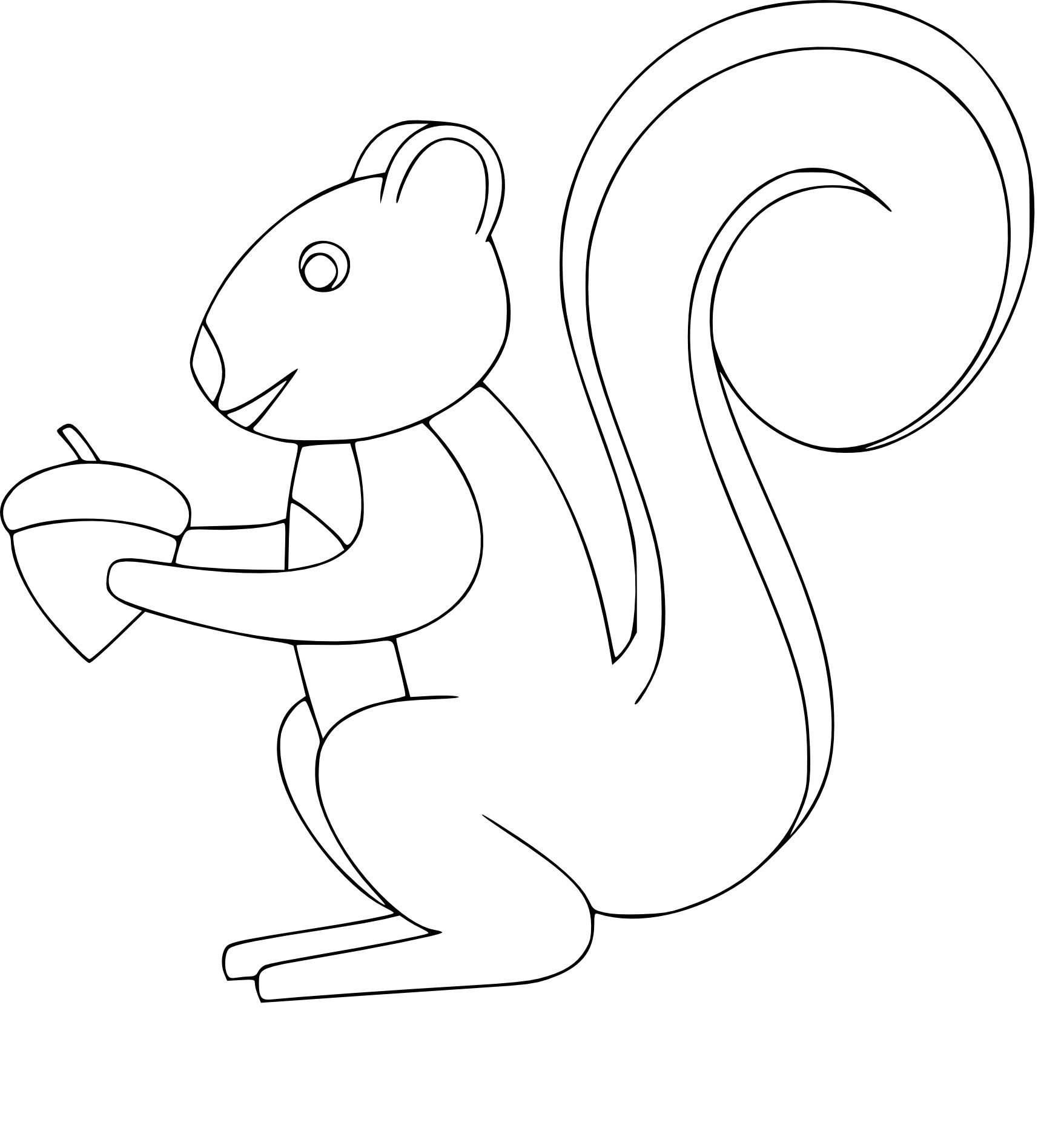 Coloriage ecureuil roux